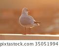 鸟儿 鸟 红嘴鸥 35051994