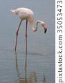 火烈鳥 鳥兒 鳥 35053473