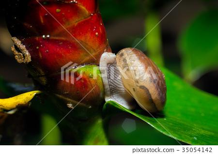 Snail on green leaf. 35054142