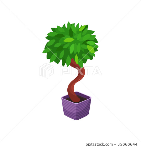 Bonsai tree houseplant, potted plant vector 35060644