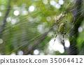 蜘蛛 昆蟲 蜘蛛網 35064412