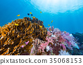 Colorful soft coral under the sea 35068153