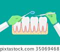 vector, molar, dental 35069468