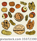 set of hand drawn nuts 35072390