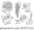 Sketches of vegetarian vegetables. Food theme 35077131