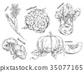 Organic food sketches. Hand drawn vegetables. 35077165