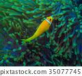 小丑鱼 鱼 咸水鱼 35077745