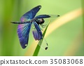 아름다운 나비 잠자리 35083068