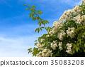 하늘, 꽃, 흰색 35083208
