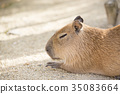 สัตว์,ภาพวาดมือ สัตว์,หน้าด้านข้าง 35083664