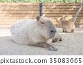สัตว์,ภาพวาดมือ สัตว์,ผ่อนคลาย 35083665