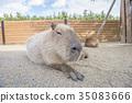 สัตว์,ภาพวาดมือ สัตว์,ผ่อนคลาย 35083666