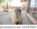 สัตว์,ภาพวาดมือ สัตว์,จมูก 35083667