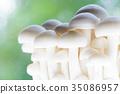 버섯 · 부나삐 35086957