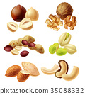 Different nuts realistic vector set 35088332