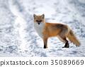 冬天 冬 下雪 35089669