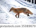 冬天 冬 下雪 35089670