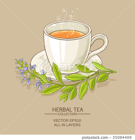 sage tea illustration 35094409