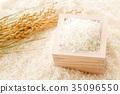 水稻 稻米 米 35096550