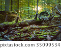 Fallen tree covered by moss in a sun rays flares 35099534
