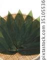 조릿대 잎, 얼룩조릿대, 녹 35105536