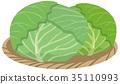 양배추, 야채, 채소 35110993