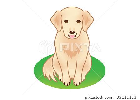 dog 35111123
