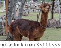 อัลพาก้า,สัตว์,ภาพวาดมือ 35111555