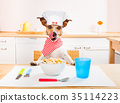 animal, chef, cuisine 35114223
