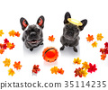 halloween  ghost  dogs trick or treat 35114235