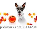 動物 狗 狗狗 35114238