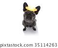 angel dog with halo 35114263