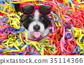 party celebration dog 35114366