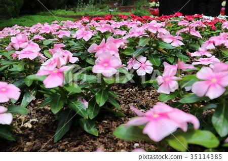 nunobiki herb garden, bloom, blossom 35114385