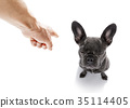 owner punishing his dog 35114405