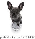 Measuring animal bulldog 35114437