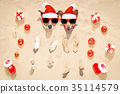 merry chtristmas  dogs at the beach 35114579