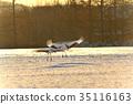 日本吊車 清晨 冬天 35116163