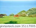 equine, horse, grass field 35117005