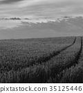 farm, road, hill 35125446