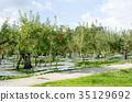 apple, agricultureh, farming 35129692