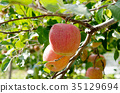 apple, apples, agricultureh 35129694