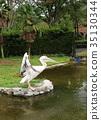 분홍, 펠리칸, 연못 35130344