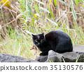 지역 고양이 쿠로 짱 35130576