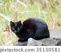 지역 고양이 쿠로 짱 35130581