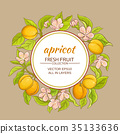 apricot, fruit, vector 35133636