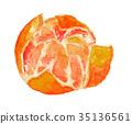 mandarin orange aquarelle 35136561