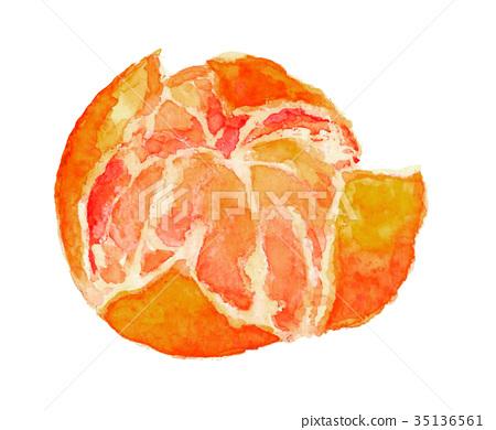 mandarin orange, aquarelle, watercolor 35136561