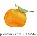 mandarin orange with 35136562