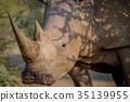 animal, horn, rhinoceros 35139955